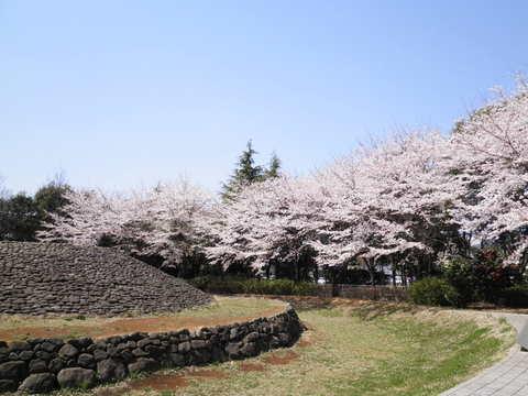 古墳と桜40.JPG