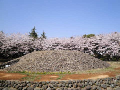 古墳と桜45.JPG