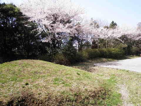 古墳と桜49.JPG