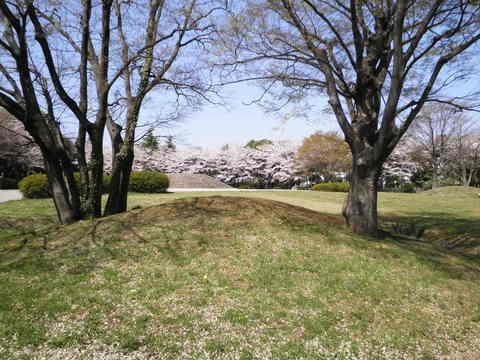 古墳と桜52.JPG
