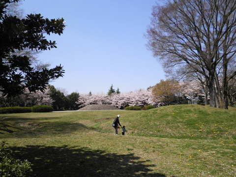 古墳と桜56.JPG