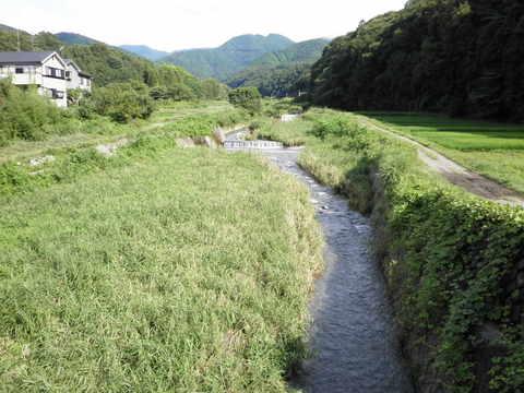 夏の四十八瀬川06.JPG
