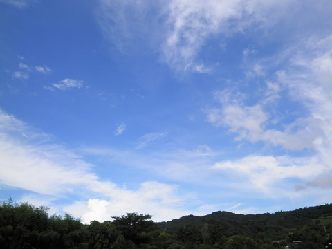 夏の青空54.JPG