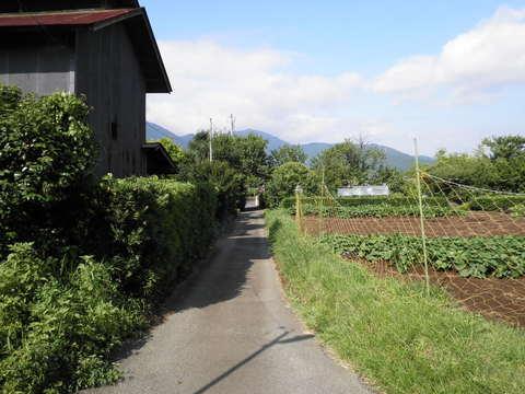 夏草の田舎道41.JPG