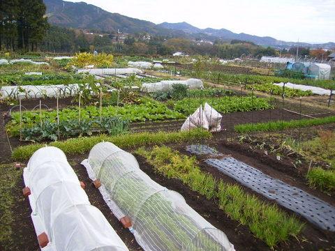 市民農園10.JPG
