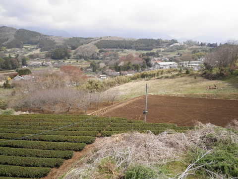 春の柳川盆地108.JPG