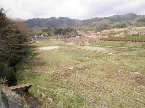 春の田んぼ127.JPG