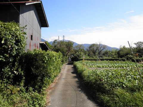 田舎道16.JPG
