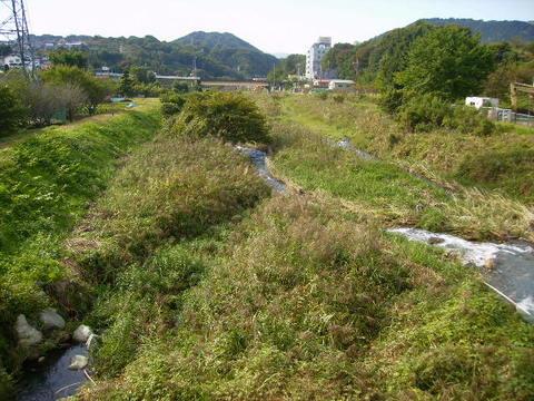 秋の四十八瀬川44.JPG