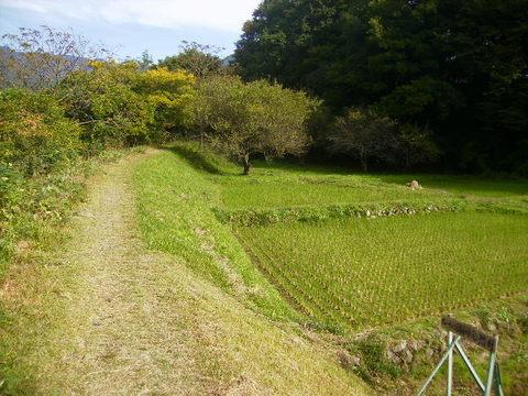 秋の土手道33.JPG
