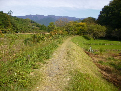 秋の土手道35.JPG