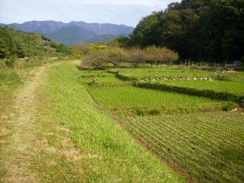 秋の田んぼ37.JPG