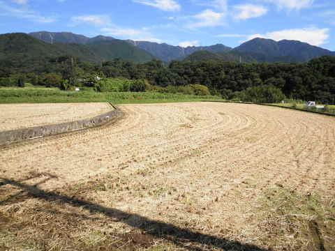 稲刈り済19.JPG