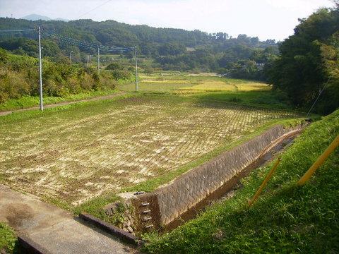 稲刈り済35.JPG