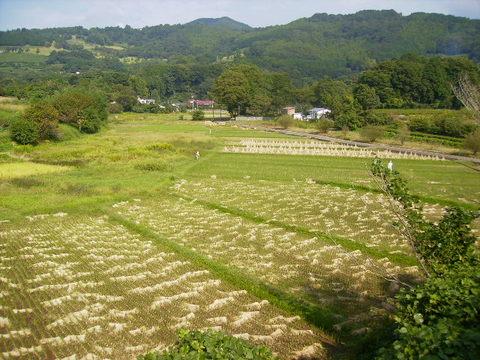 稲刈り済44.JPG