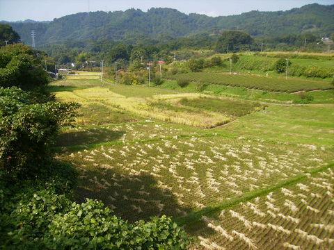 稲刈り済45.JPG
