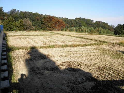 稲刈り済54.JPG