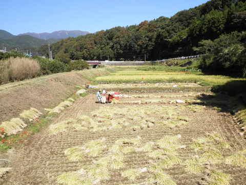 稲刈り済66.JPG