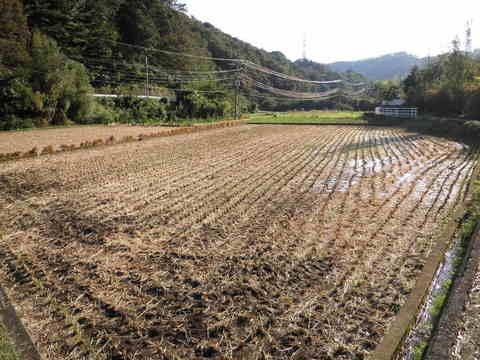 稲刈り済71.JPG