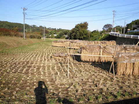 稲刈り済72.JPG
