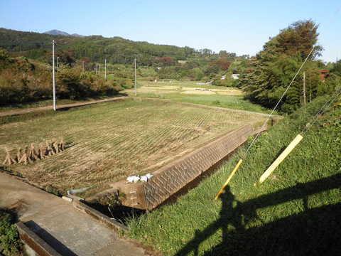 稲刈り済73.JPG