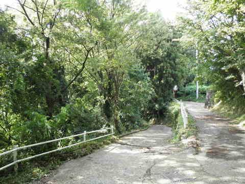 緑の下り道45.JPG