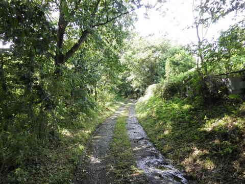緑の林道40.JPG