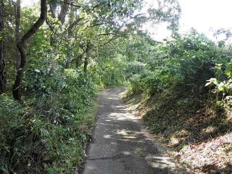 緑の林道44.JPG