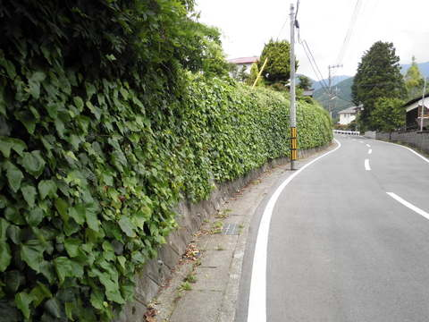 蔦壁の道24.JPG