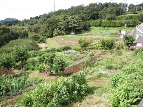 野菜畑26.JPG