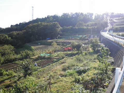 野菜畑62.JPG