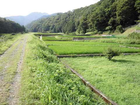 青田55.JPG
